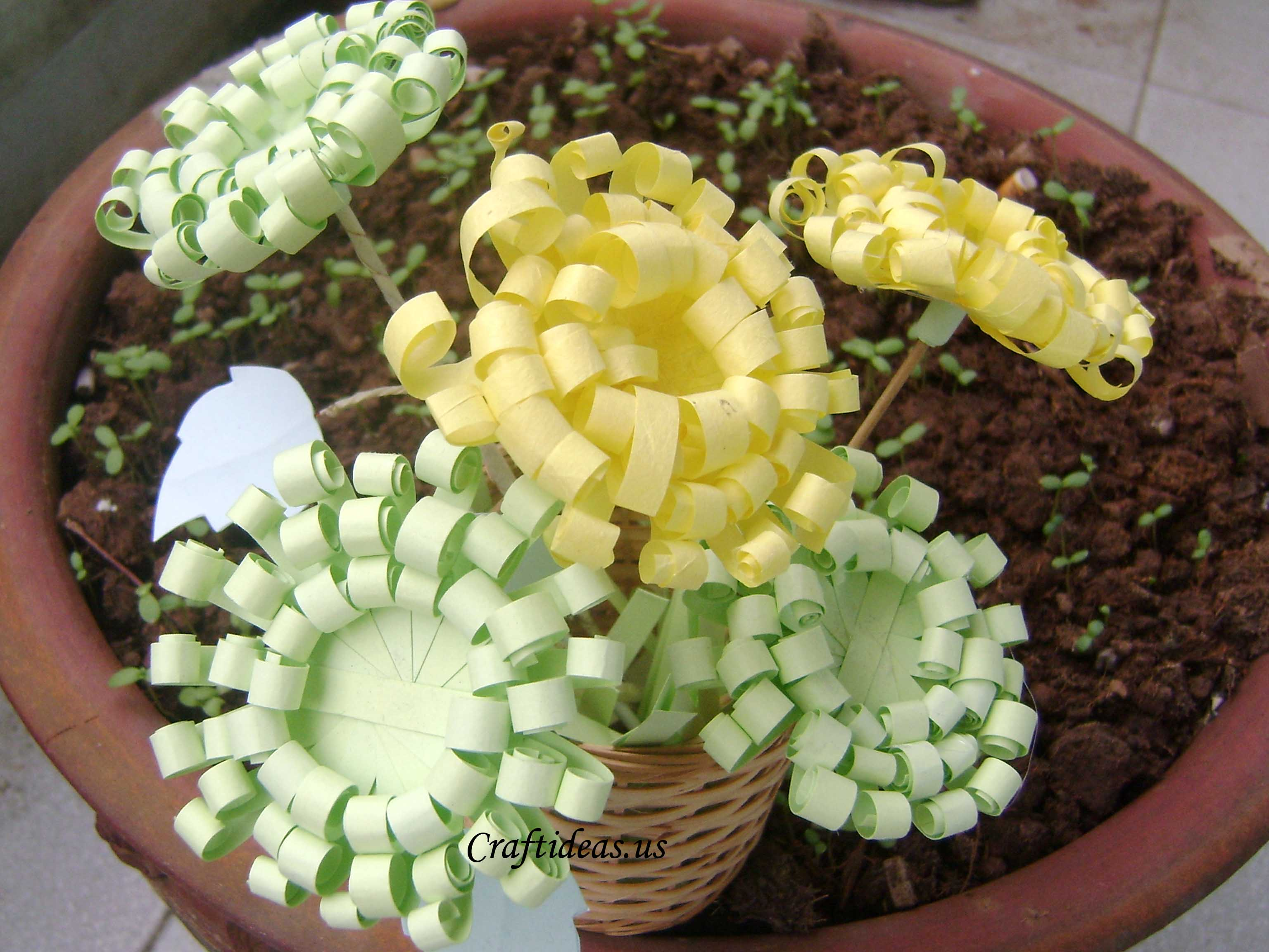 Paper Crafts Paper Chrysanthemums on Ideas For Using Chrysanthemum On First